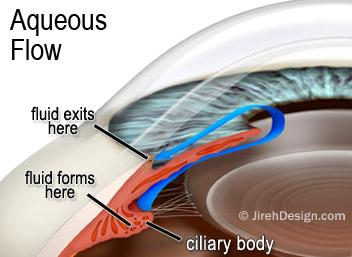 Aqueous flow in glaucoma