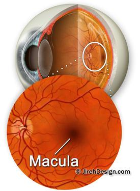 Macula photo OCT scanner page
