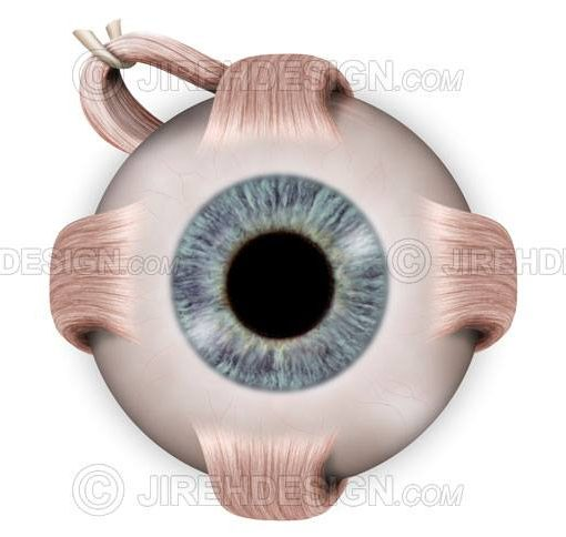 Normal eye anatomy illustration with cross-section and labels #an0002