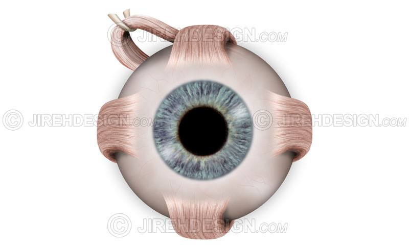 Normal eye anatomy illustration with cross-section and labels. Labels are optional