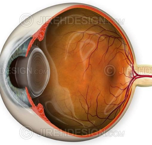 Normal eye anatomy illustration depicting a unique cross-section view #an0005