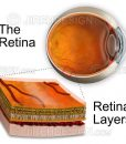 Retinal layers illustration inset with eyeball cross-section