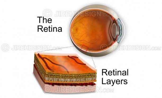 Retinal layers illustration inset with eyeball cross-section #an0020
