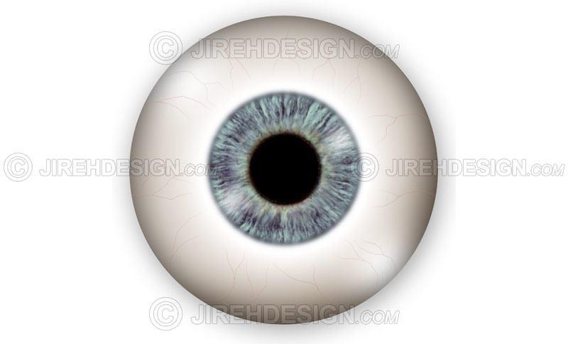 Eyeball and globe illustration – external view #an0022