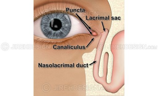 Lacrimal system diagram lacrimal sac, nasolacrimal duct, punctum and canaliculus #an0026