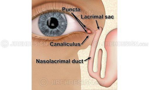 Lacrimal system diagram lacrimal sac, nasolacrimal duct, punctum and canaliculus #an0026
