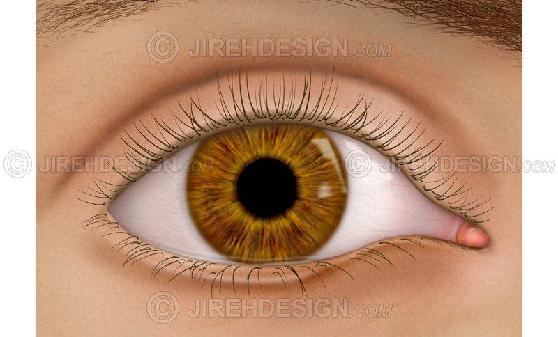 External eye with eyelids #an0027