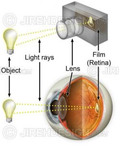 Vision / camera analogy with object, light rays, camera and retina