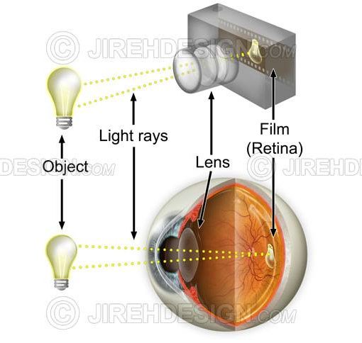 Vision camera analogy with object, light rays, camera and retina #an0042