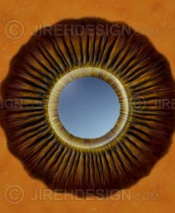 Ciliary process anatomy illustration – retina view from inside the eye looking out