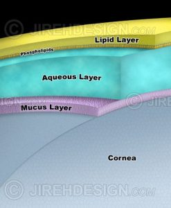 Tear layer schematic with lipid, aqueous and mucus layers