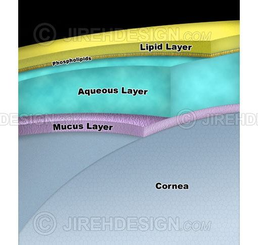 Tear layer schematic with lipid, aqueous and mucus layers #an0046