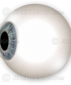 Side view of the eyeball globe including iris and cornea. Optional labels are available