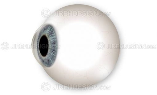 Side view of the eyeball globe including iris and cornea #an0050