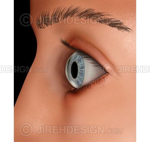 External view of the eye and side of face #an0054