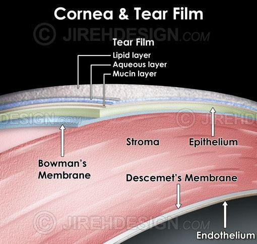 Cornea and tear film layers #an0060