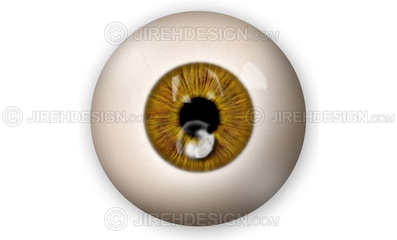 Fungal orneal ulcer graphic illustration