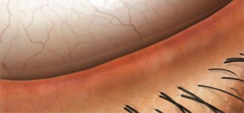 Stock eye anatomy artwork and illustrations