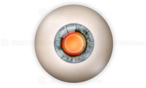 IOL implant in the eye #suca0036