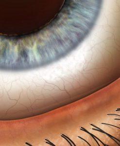 Eye Illustrations
