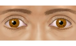 Eye and face illustration - an0027a