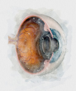 Eyeball Cross-section Watercolor art print eye doctor decor