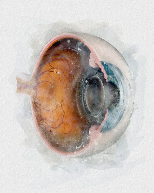 Eyeball Cross-section Watercolor art print eye doctor decor