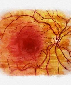 Eye doctor office decor posterior pole retina anatomy art print
