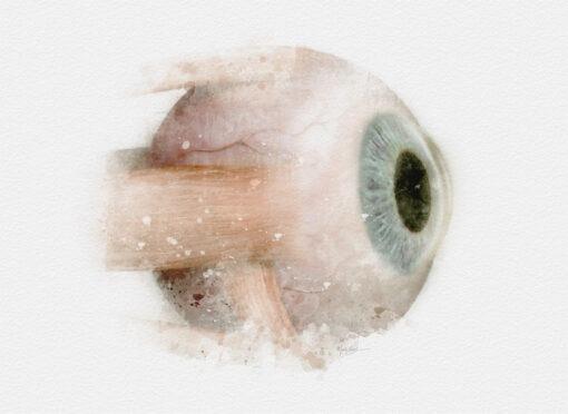 Watercolor Eyeball Muscles art print