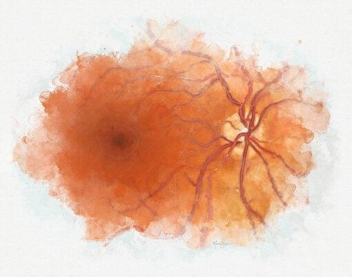 Retina doctor gift retina anatomy art print, eye doctor decor